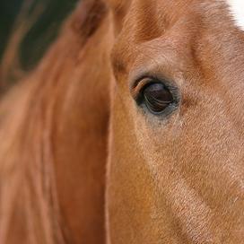Ton Cooymans: 'Er is hier geen ziek paard geslacht