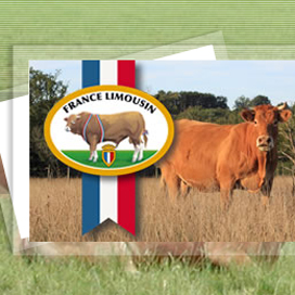 Rundvlees & Co neemt France Limousin Nederland over
