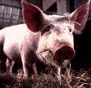 Milieukeur voor slager Van der Schoot