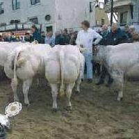 Paasvee tentoonstelling Schagen op 12 maart
