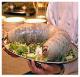Attachment 001 food image vls11370i01 80x77