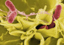 Voedselvergiftiging eist 32 levens in 2008