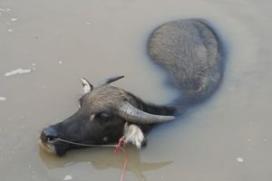 Waterbuffelvlees bij Jumbo Dokkum