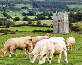 Groei Ierse voedingsmiddelenexport zet verder door