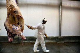 Britse runderslacht daalt flink