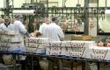 Wereldpluimveemarkt groeit het hardst