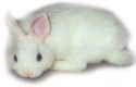 Vrees voor illegale slacht konijnen