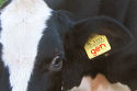 Greenpeace wil label op genvlees