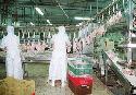 Nederlandse bedrijven lijden nog niet onder Britse H5N1