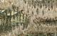 Attachment 001 food image vls7649i01 80x51
