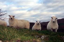 Actieve promotie lams- en rundvlees uit Wales