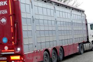 NVWA controleert extra op dierenwelzijn bij hoge temperaturen