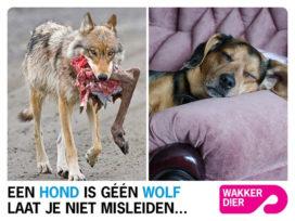 Nieuw doelwit voor Wakker Dier: hondenvoer