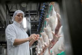 NVWA maakt gegevens pluimveeslachthuizen openbaar