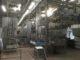 Varkensslachtlijn 80x60