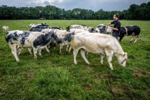Met het eigen rundvlees van de eigen dieren kan Kwaliteitsslagerij Rietveld zich uitstekend onderscheiden.