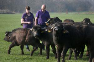 Richard en Carina Zeestraten bij hun buffels in de wei. Foto: De Waterbuffelfarm