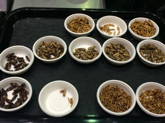 Meelwormen in hartige en zoete variaties: van mango en chocolade tot gepeperd.