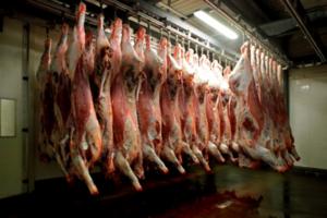 Naleving hygiëne en dierenwelzijn bij slachthuizen openbaar