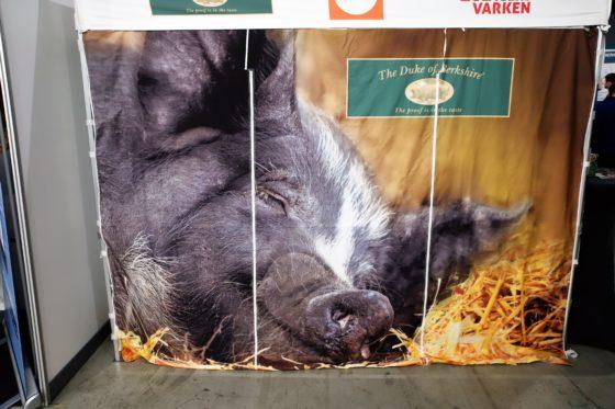 The Duke of Berkshire is een authentiek varkensras met een exclusieve smaak. Foto: Peter Garstenveld