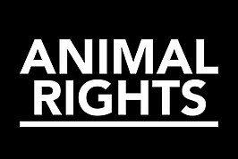 Animal Rights wil sluiting slachterij Hasselt