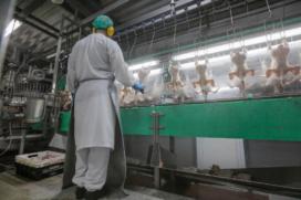 Hygiënisch werken blijft aandachtspunt voor pluimveeslachthuizen